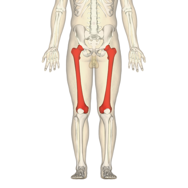 Which Is The Hardest Bone In The Human Body Quora