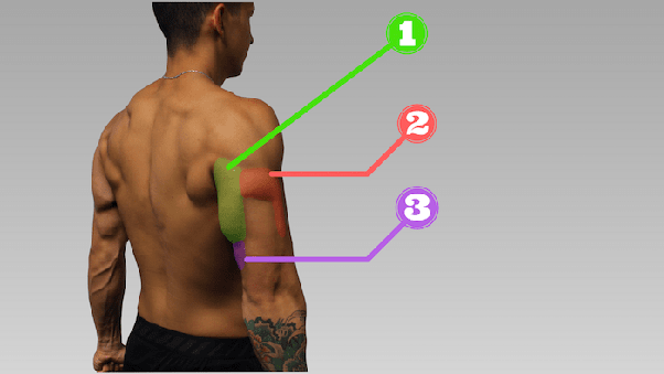 What Are Some Alternatives To Tricep Dips Quora