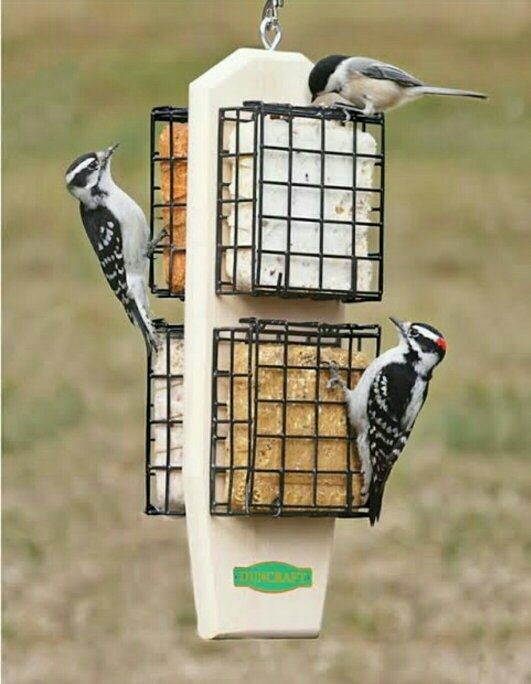 version to feeder out how squirrels ways safely of away image step keeping from feeders keep wikihow bird titled deter