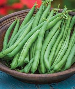 What is the scientific name for beans? - Quora