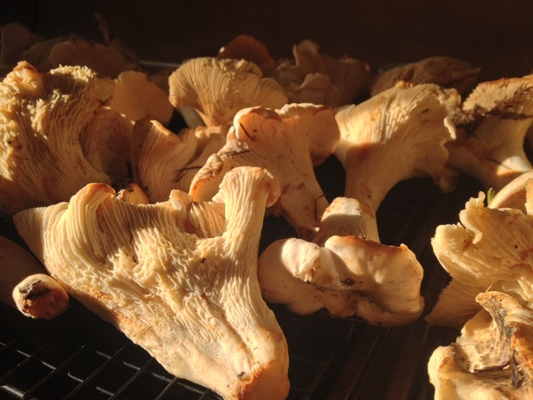 Wild Mushrooms: What are some creative ways to cook ...