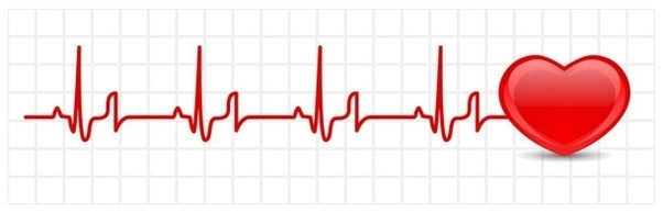 Heart Beat Slower Or Faster For Babies Quora