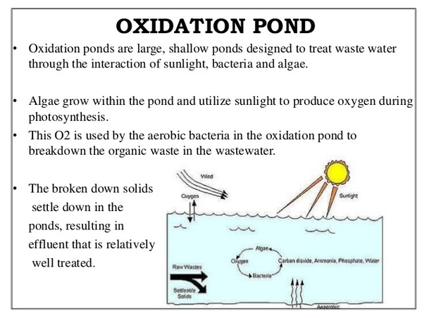 what is the difference between an oxidation pond ... diagram of oxidation pond diagram of b oxidation