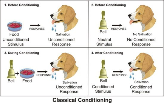 What Are Examples Of Classical Conditioning In The Classroom Quora