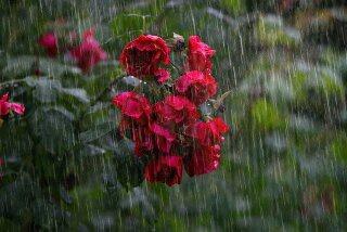 Apakah Perlu Menyiram Tanaman Setelan Hujan Kenapa Saya Lihat Ada Orang Yang Seperti Itu Quora