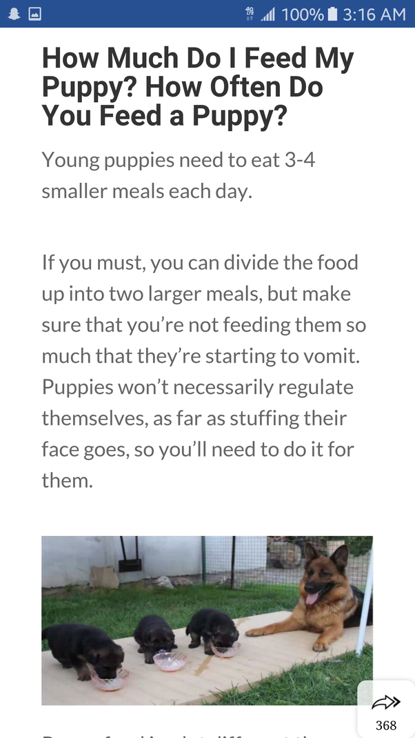 How Much Homemade Dog Food Should You Feed Your Dog