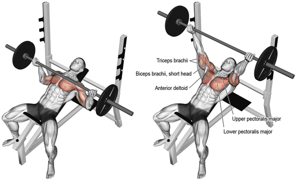 Is the flat bench or incline bench more effective for ... |Flat Bench Press Muscles Worked