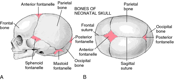 Do baby skulls have soft spots? - Quora