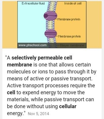 what is a selectively permeable membrane