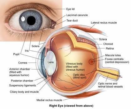 眼科移植或类似的东西是否可能导致青光眼永久性损伤?