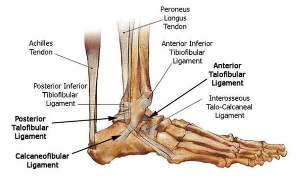 What is an ankle bone? - Quora