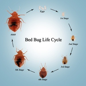 Can I break my apartment lease because of bed bugs? Is there