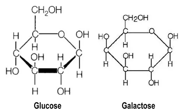 L Galactose Why is galactos...