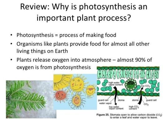 why is photosynthesis is important