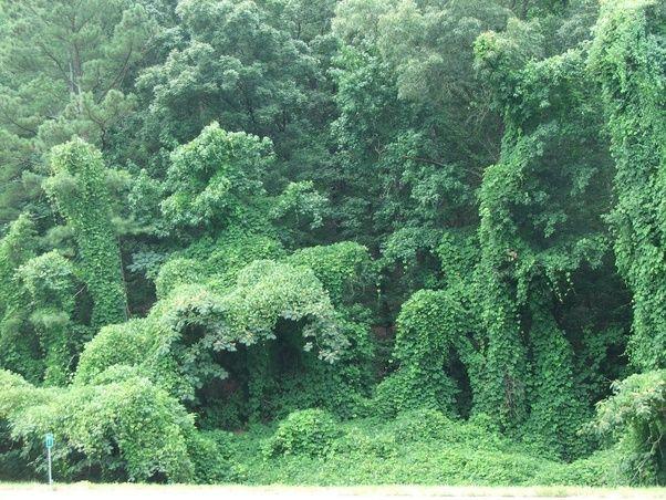 What Are Examples Of Invasive Species In North Carolina Quora