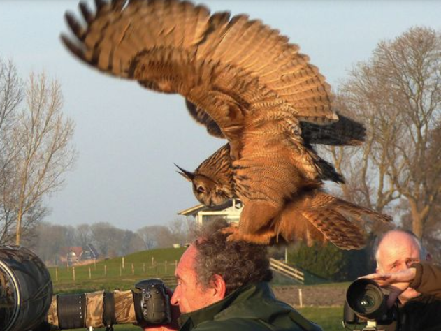 Which bird of prey is a freak of nature when it comes to