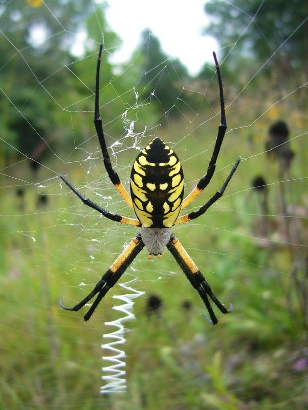 What is the cutest spider? - Quora