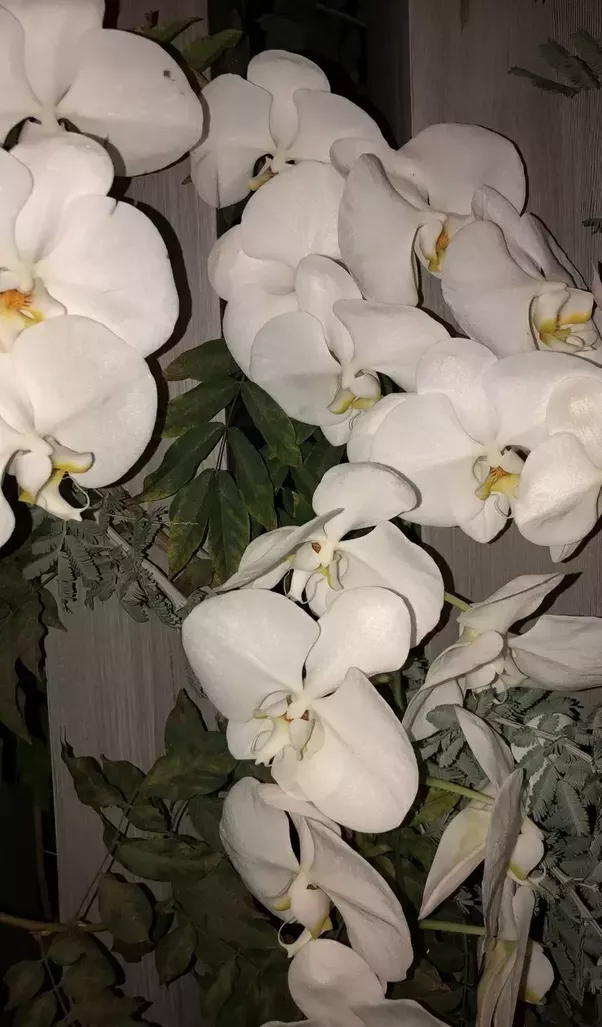 What do types of flowers mean quora the pink orchid has the honor of representing innocence femininity grace joy and happiness purple flowers often represent royalty respect admiration mightylinksfo