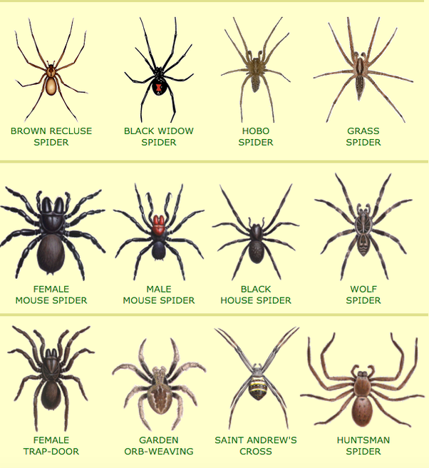 how to kill spiders in house. Most Spiders Are Rather Harmless And Won\u0027t Attack Humans Unless They Have Egg Sacks. Even Kill You, Just Make Life Extremely Painful. How To In House E