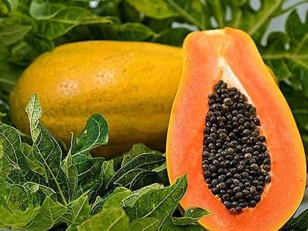 What are some health benefits of eating papaya? - Quora