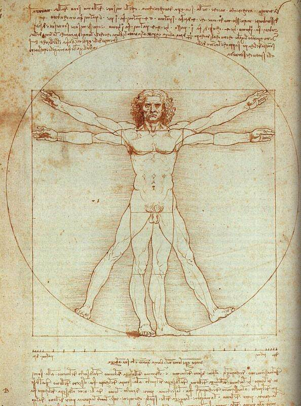 Why Are Most Of The Vital Organs Present In The Upper Half Of The