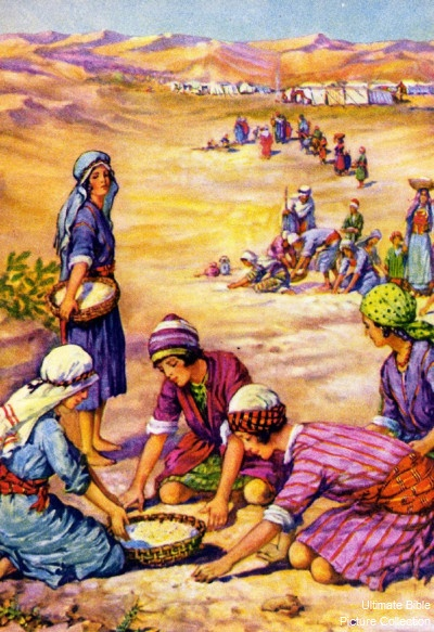 Image result for israelites in the desert