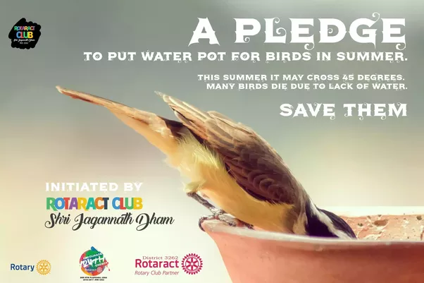 How To Save Birds In The Summer Quora