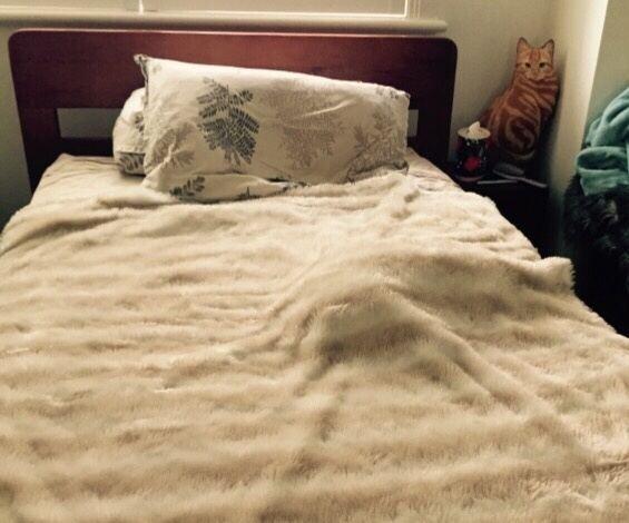 My Cat Sleeps Under The Bed