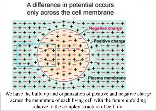 What is a possible way to find evidence that our consciouness lives this can be seen with the built up and organization of positive and negative charge across the membrane of each living cell at high temperature we have a urtaz Choice Image