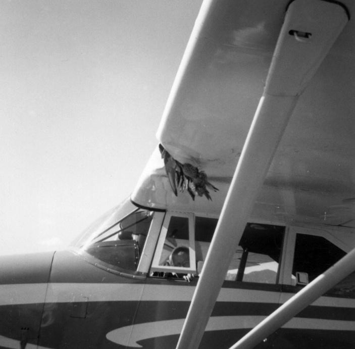 Do birds ever fly into aircraft engines? - Quora