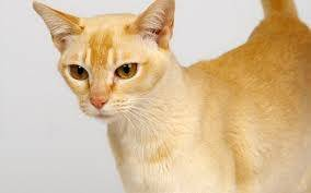 Blonde Cat picture 27