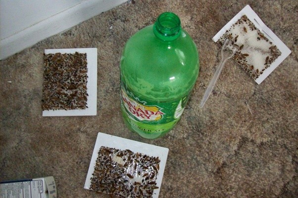 How to get rid of bed bugs without an exterminator Quora