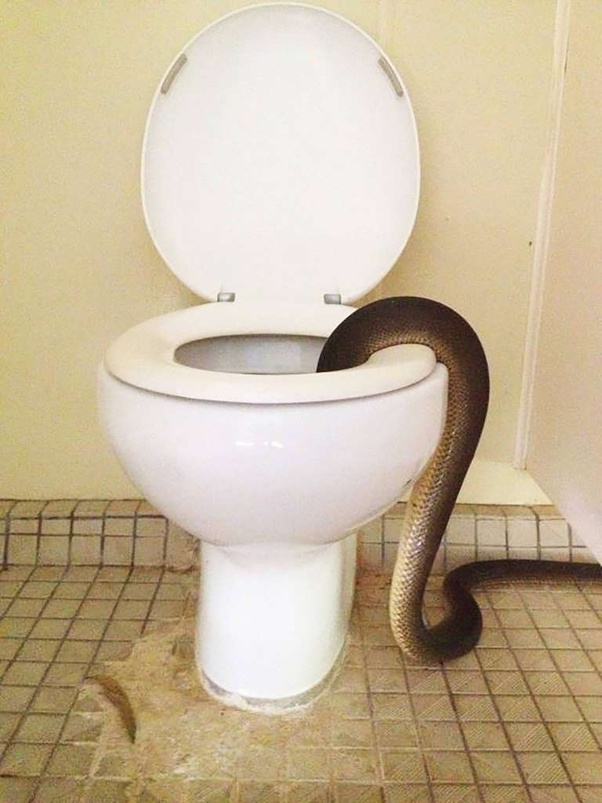 What Do You Think About The Toilets In Japan That Also Has