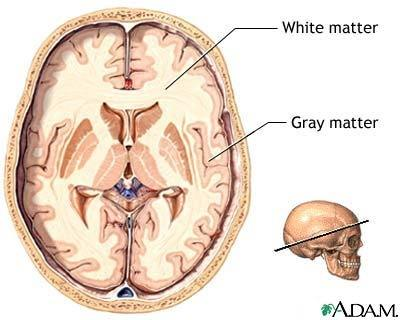 Why Does Grey Matter Position Change Between Brain And Spinal Cord