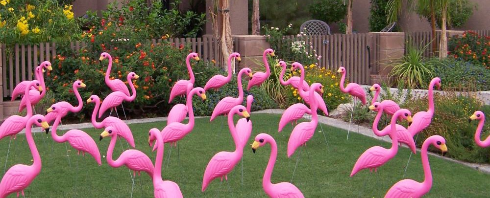 You Might Now Know This But Pink Plastic Flamingos Are An Endangered Species Those Of Us Who Allow These Majestic Creatures To Flock In Our Yards