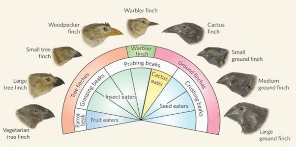 How Much Do Species Have To Diverge To The Point That They Cant