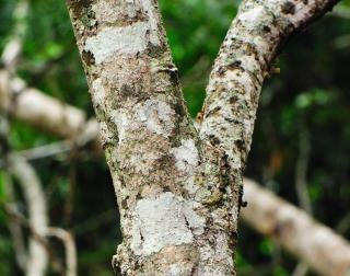 How does camouflage help animals survive? - Quora