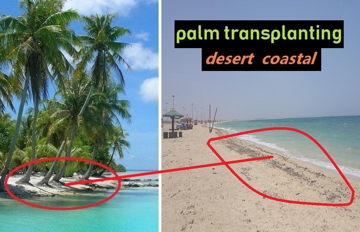 uses of coconut tree in marathi