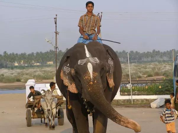 Sexfullmivie make d girl and elephant sex games man