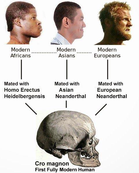 Did Homo neanderthalen...