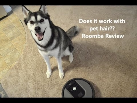 Groovy Do Roomba Vacs Work To Remove Pet Fur Which Model Quora Download Free Architecture Designs Scobabritishbridgeorg