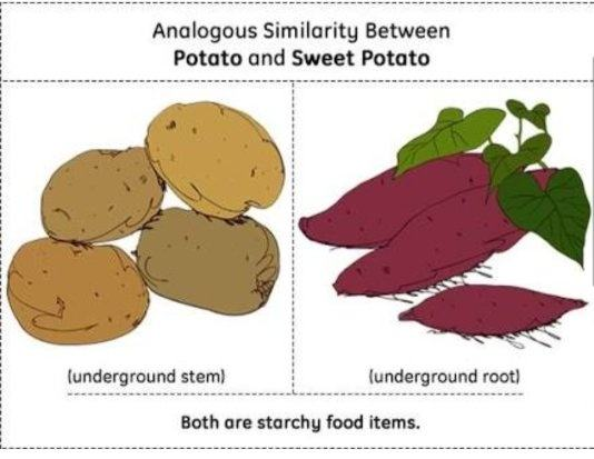 What Are The Examples Of Homologous And Analogous Organs In Plants