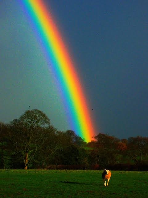 How Many Colours Are Graduated Within The Rainbow Quora