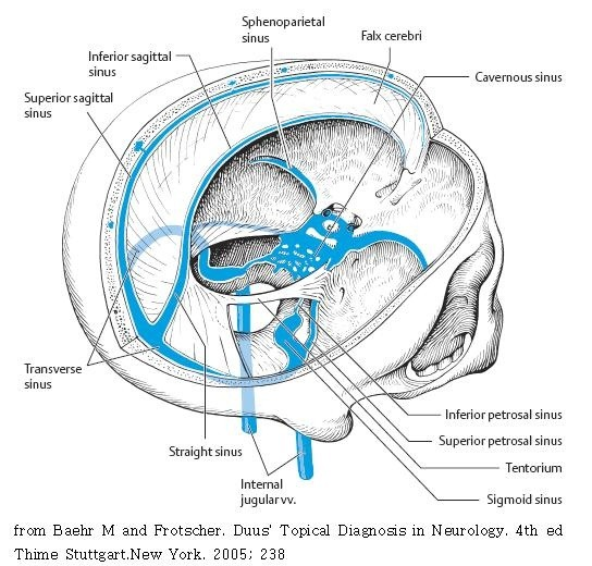 Where are the veins in the brain or nearby the organ? - Quora