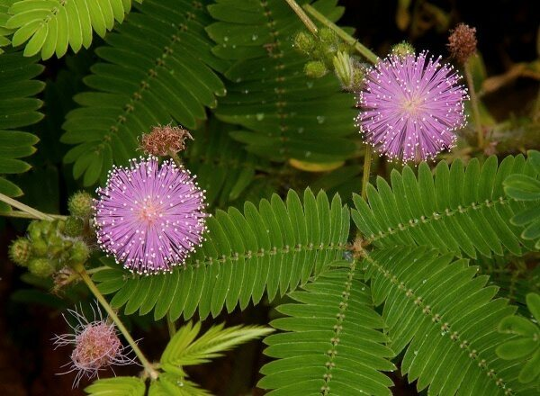Which plants in India have DMT? - Quora