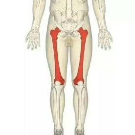 What is the longest bone in the body quora femur bone in thighs commonly known as thigh bone ccuart Choice Image