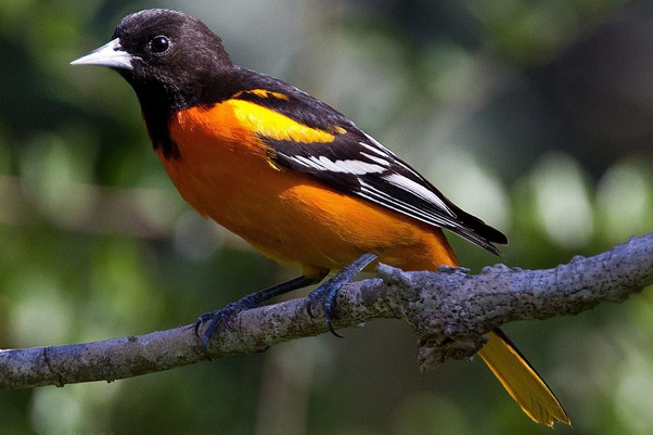 What Are Some Of The Most Colorful Birds Quora