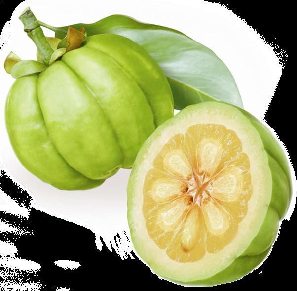 garcinia meaning in telugu