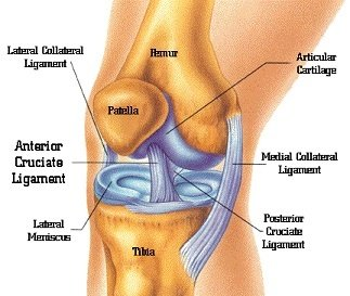 What is joint replacement surgery quora total joint replacement may be considered in patients with severe pain which is not relieved through medications injections physical therapy ccuart Choice Image