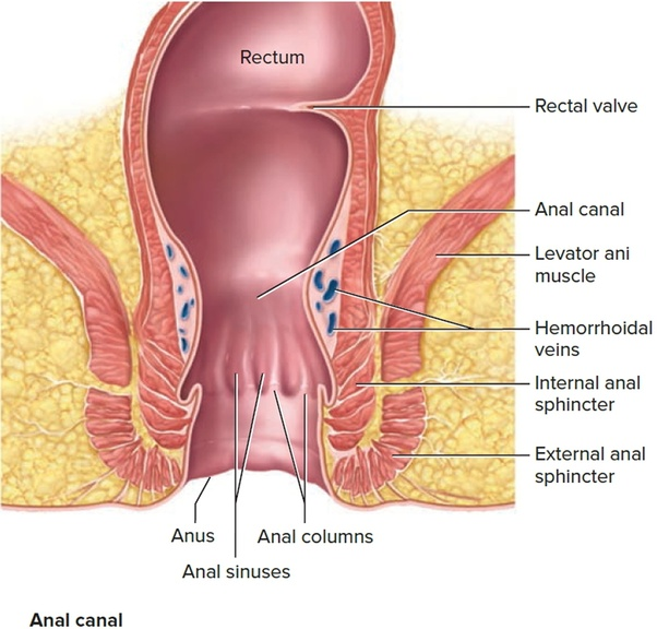 anal sex male rectum